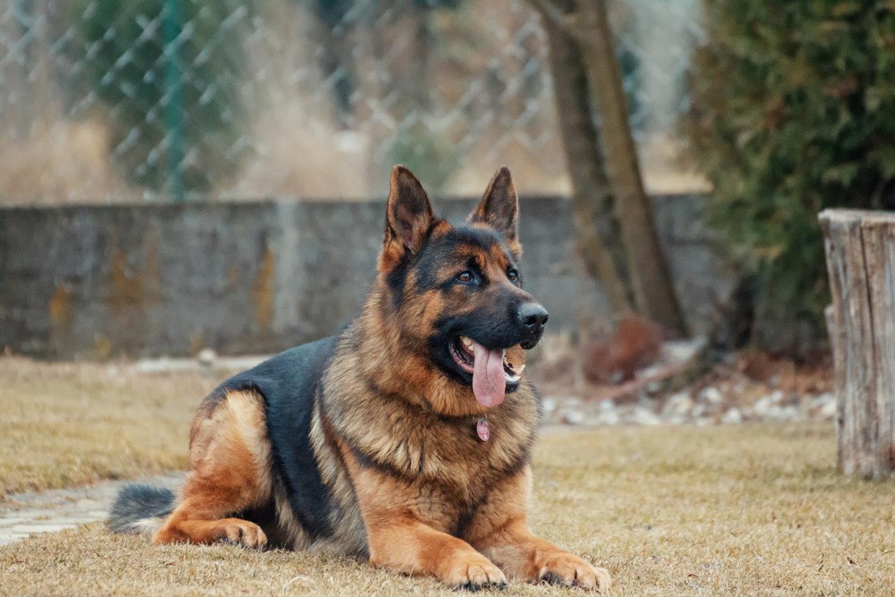 best houston dog bite lawyers